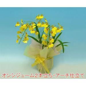 オンシジュームアロハイワナガ2本立ちアーチ仕立て 鮮やかな黄色の洋ランです。送料無料|heart-flower