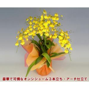 オンシジュームアロハイワナガ3本立ちアーチ仕立て 蘭初心者の方でも管理しやすいです。送料無料|heart-flower