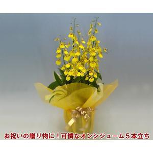 オンシジュームアロハイワナガ5本立ち 蘭初心者の方でも管理しやすいです。送料無料|heart-flower