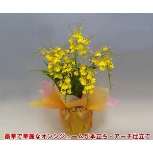 オンシジュームアロハイワナガ5本立ちアーチ仕立て 蘭初心者の方でも管理しやすいです。送料無料|heart-flower