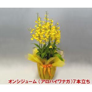 オンシジュームアロハイワナガ7本立ち 蘭初心者の方でも管理しやすいです。送料無料|heart-flower