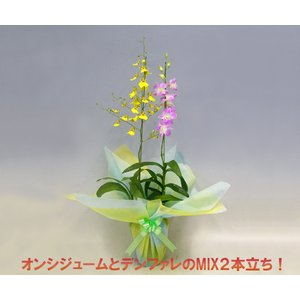 オンシジュームアロハイワナガとデンファレのミックス2本立ち|heart-flower