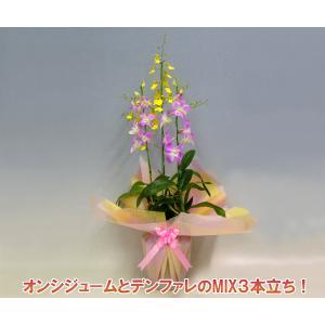 オンシジュームアロハイワナガとデンファレのミックス3本立ち|heart-flower