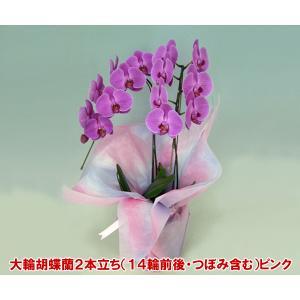 胡蝶蘭2本立ちピンク14輪前後 つぼみ含む お花のプレゼント|heart-flower