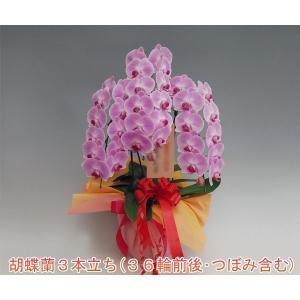 胡蝶蘭3本立ち 36輪前後 つぼみ含む  ピンク 期間限定ポイント10倍 送料無料 お花ギフト|heart-flower