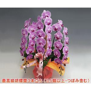 贈答におすすめ 胡蝶蘭3本立ち 35リン前後 つぼみ含む  ピンク 花ギフト|heart-flower