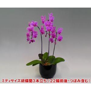 幸福が飛んでくる ミディ胡蝶蘭3本立ち22輪前後 つぼみ含む  母の日の贈り物に|heart-flower