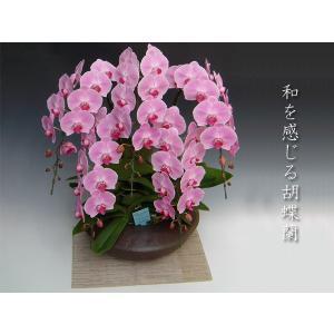 和風胡蝶蘭 大輪ピンク5本立ち 開店祝い開業祝に 送料無料|heart-flower