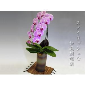 和風胡蝶蘭 大輪ピンク1本立ち9輪前後 つぼみ含む 鉢付き|heart-flower