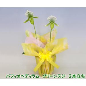 産地直送 珍しい洋蘭 『パフィオペディラム グリーンスジ』 2本立ち 珍種の洋蘭です|heart-flower
