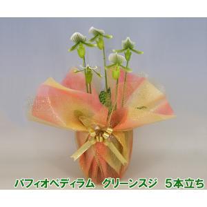 産地直送 珍しい洋蘭 『パフィオペディラム グリーンスジ』 5本立ち レアな洋蘭です|heart-flower