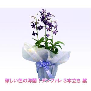 珍しい紫色の洋蘭 デンファレ 3本立ち 紫 花持ちの良い洋蘭です|heart-flower