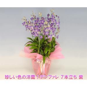 珍しい紫色の洋蘭 デンファレ 7本立ち 紫 花持ちの良い洋蘭です|heart-flower