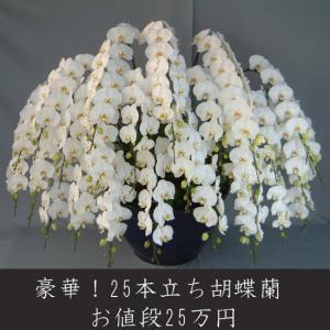 最高級の胡蝶蘭を産地直送でお届け。 開店祝い・開業祝い 就任祝い・昇進祝い 誕生日祝い・結婚祝い 新...