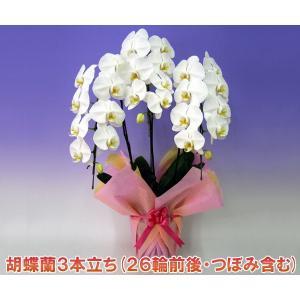 胡蝶蘭蘭3本立ち26輪前後 つぼみ含む  ホワイト お中元 お歳暮|heart-flower