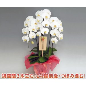 最高級の胡蝶蘭を産地直送でお届け。 様々な賞を受賞している契約農園から産地直送でお届けします。  蘭...