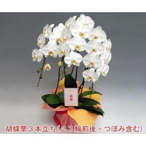 法人向け 胡蝶蘭3本立ち 27輪前後 つぼみ含む  ホワイト フラワーギフト |heart-flower