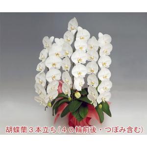 法人ギフト 胡蝶蘭3本立ち40輪前後 つぼみ含む  ホワイト ポイント10倍 送料無料 15%OFF|heart-flower