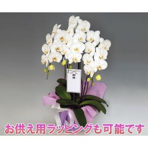 洋蘭の鉄人が育てた豪華胡蝶蘭3本立ち 30輪前後 つぼみ含む ホワイト  白色|heart-flower|02