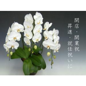 贈答品におすすめの胡蝶蘭 15%OFF 農林水産大臣賞など数々な賞を受賞した「洋蘭の鉄人」森田氏が育てた当店人気No1 の胡蝶蘭です。|heart-flower