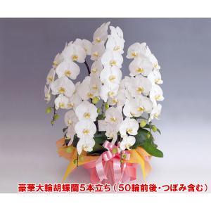 胡蝶蘭5本立ち 50リン前後 つぼみ含む  ホワイト  送料無料 24%OFF|heart-flower