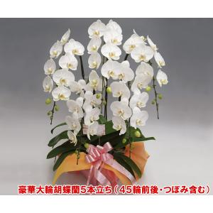 豪華胡蝶蘭5本立ち 45輪前後 つぼみ含む  ホワイト 送料無料 15%OFF ビジネス用|heart-flower