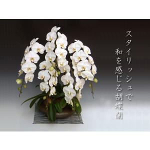 和風胡蝶蘭 大輪ホワイト5本立ち 開店祝い開業祝に 送料無料 洋蘭の鉄人|heart-flower