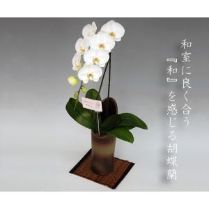和風胡蝶蘭 大輪ホワイト1本立ち 和室に合う蘭 洋蘭ギフト|heart-flower