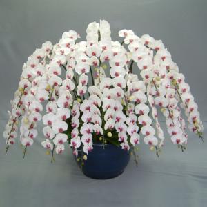 お祝いに最高級の胡蝶蘭を。豪華胡蝶蘭20本立ち 赤リップ 関東限定お届け|heart-flower