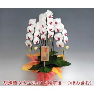 贈答品 胡蝶蘭3本立ち 27輪前後 つぼみ含む 赤リップ 温室で丁寧に育てました heart-flower