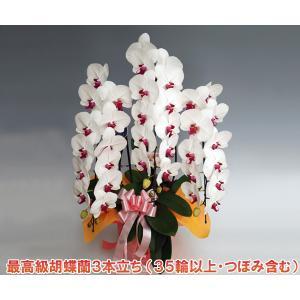 最高級の胡蝶蘭を産地直送でお届け  様々な賞を受賞している契約農園から産地直送でお届けします。  『...