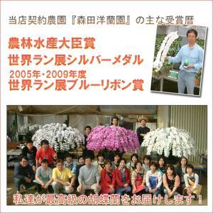 豪華大輪胡蝶蘭3本立ち 35輪前後 つぼみ含む  赤リップ 就任祝いに|heart-flower|02
