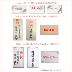 豪華大輪胡蝶蘭3本立ち 35輪前後 つぼみ含む  赤リップ 就任祝いに|heart-flower|05