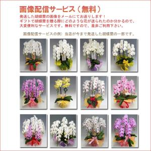 豪華胡蝶蘭5本立ち45輪前後 つぼみ含む  赤リップ 特A級の胡蝶蘭です。|heart-flower|04