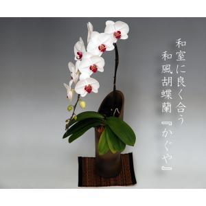 和風胡蝶蘭 赤リップ大輪1本立ち9輪前後 つぼみ含む  鉢花 ギフト|heart-flower