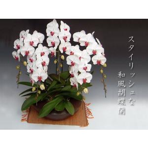 和風胡蝶蘭 大輪赤リップ5本立ち 開店祝い開業祝に 法人ギフトに heart-flower