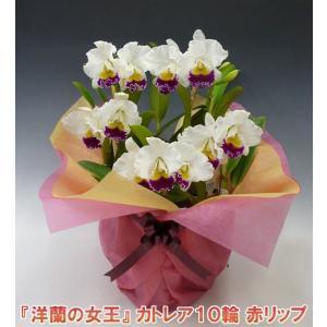 産地直送でお届け 蘭の女王カトレア10輪赤リップ  インパクト大 最高級の洋蘭です。|heart-flower