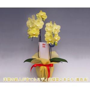 『蘭の王様』最高級の胡蝶蘭は昇進祝い、就任祝い、開店祝いや開業祝いなどのビジネスギフトにも大好評。 ...