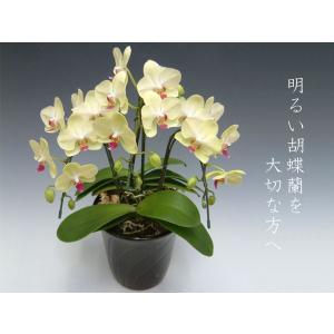 黄色の胡蝶蘭3本立ち ザルツマン つぼみ多めでの出荷となります。 結婚祝い出産祝いご自宅用に heart-flower