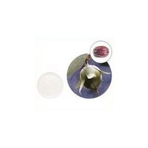 【GET!生活の木 ホホバオイル・クリア(精製) 25mL】アロマテラピー|heartland2006