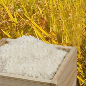 2019年秋収穫 ひのひかり 10kg 兵庫県 播州小野産米 冷却保管|hearty-e