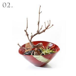 【02】サラダボウル 昇龍(朱) × 枯れ盆栽「赤松」|heiando