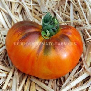 Blue Tomato INDIGOPineapple Blues ブルー・トマト・パイナップル・ブルース(9cmポット自根苗4苗)*予約商品...