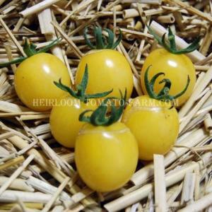 Heirloom Tomato Snowberry エアルーム・トマト・スノーベリー (15 see...