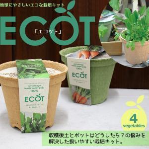 古紙100%の再生紙ポットで育てる野菜栽培キット『エコット』 比較的簡単に育てることができる4種類の...