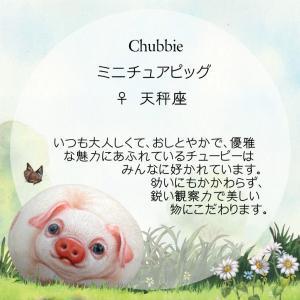 ヘンリーキャットGEアートストーン子豚シリーズ【チュービー】|henry-shop|05