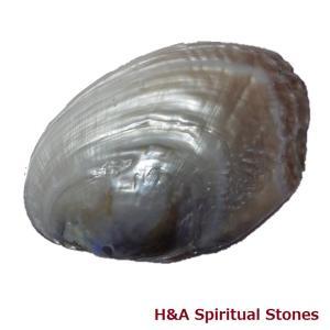 真珠貝殻 パールポリッシュディッシュ Lサイズ|herbalkstore
