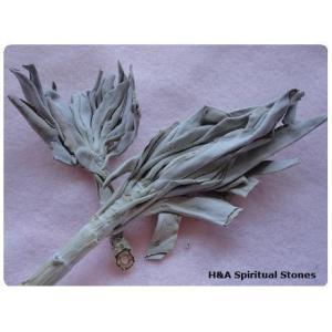 ホワイトセージ(浄化用アイテム)茎付き/クラスター 量売10g〜 White Sage herbalkstore