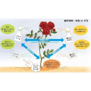 天然植物性有機肥料 ジックニームケーキ 1kg袋|herbnomegumi|03