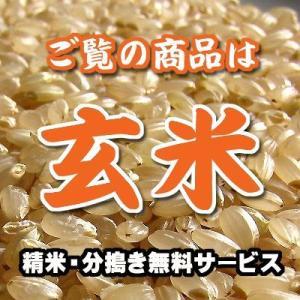 愛知産 コシヒカリ 玄米 1kg...
